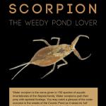 SCORPION poster